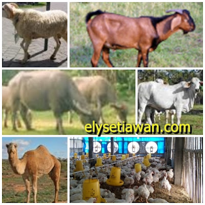 contoh binatang ternak