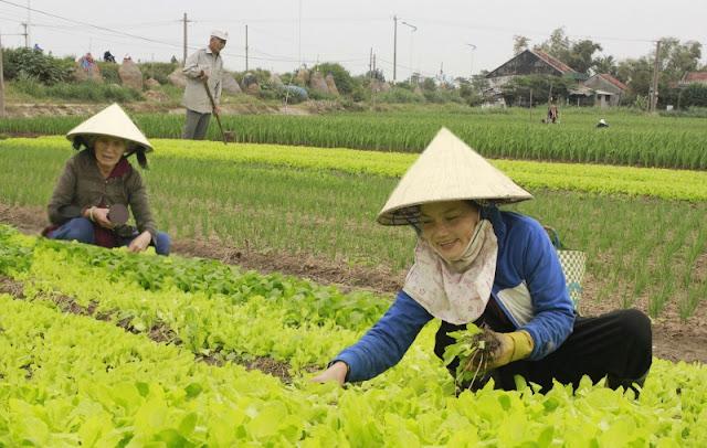 Dịch vụ cho thuê xe hợp đồng du lịch tại Phú Yên - Làng rau Ngọc Lãng