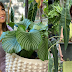 Aubrey Miles owns expensive plant worth P300,000 in her collection