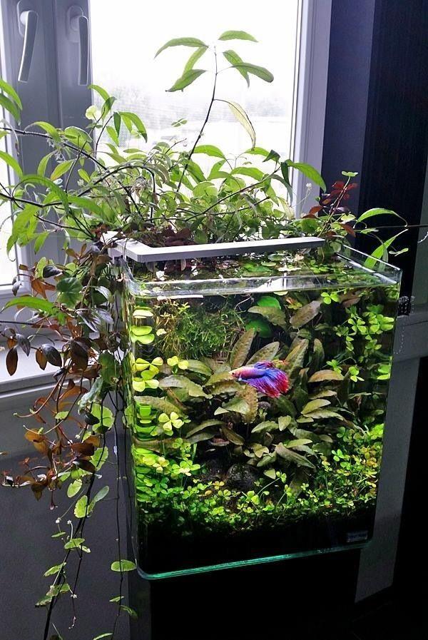 Image Live Plants for Betta Fish Vase