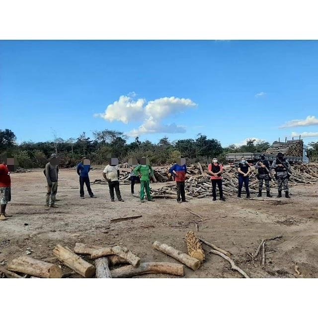 Elesbão Veloso: Ação integrada resgata adolescentes em condições análogas a escravidão e apreende grande quantidade de madeira
