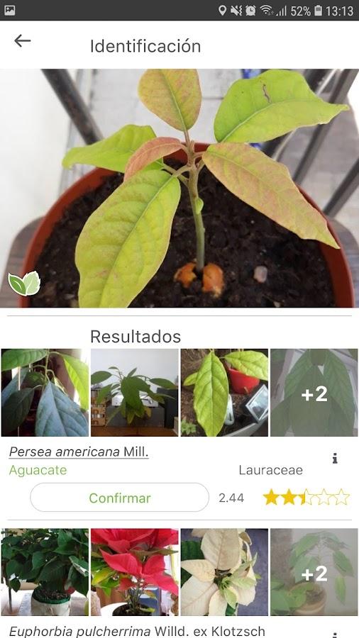 resultados en la búsqueda de recursos vegetales en plantnet