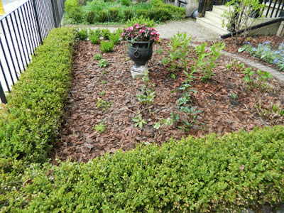 Cabbagetown Toronto front garden makeover after by Paul Jung Gardening Services