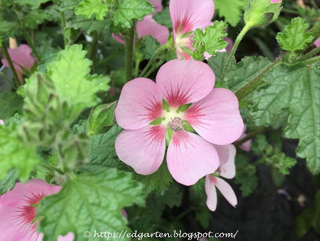 blühende Pflanze