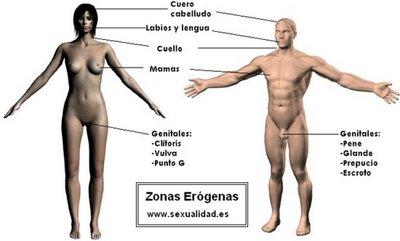 Tuguiasexual zonas erogenas