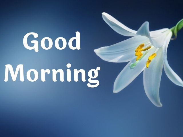 Good Morning Flower Pic Download HD