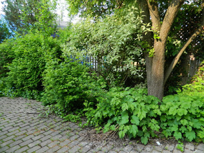 Toronto Wychwood Backyard Spring Cleanup Before by Paul Jung Gardening Services--a Toronto Gardening Services Company