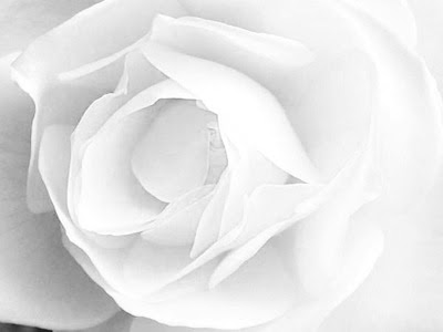 Image result for White: colour