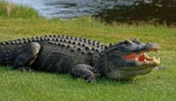 Cara membaca indikator alligator forex