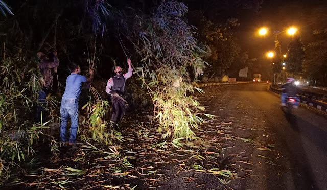 Hujan Angin Akibatkan Pohon Bambu Tumbang di Jalan Raya Selabaya Kalimanah