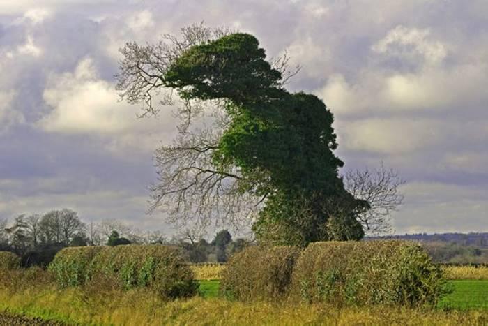 Tree-Rex.
