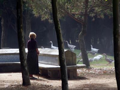 Senhora de bengala observando vários gansos