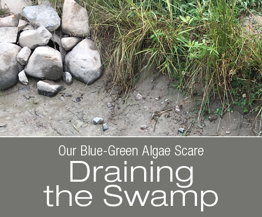 Our Blue-Green Algae Scare: Draining the Swamp