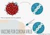 Sắp sửa có Vac-xin điều trị virus Corona