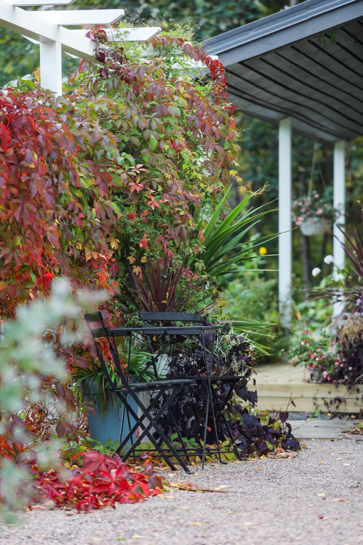 puutarha-syysvärit-100outdoor