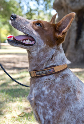 padded cushioned dog collar