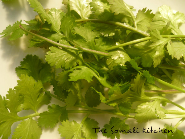 Coriander leaves ( Kabsar caleen in somali language)