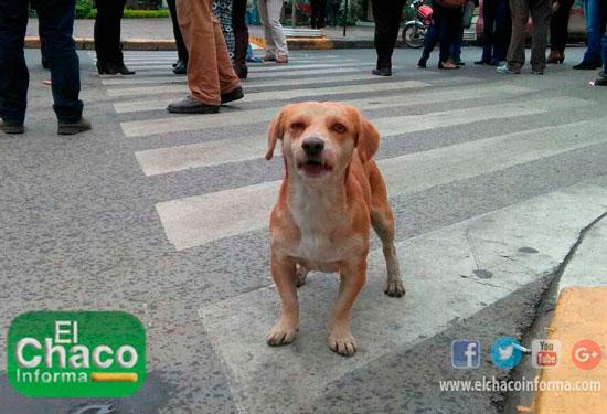 En Tarija está Cuetillo emulando lo que hace Petardo en Potosí