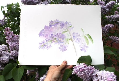 Lilacs Watercolor Painting
