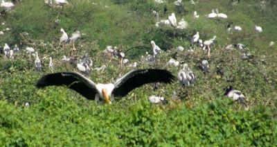 Bird sanctuary of india
