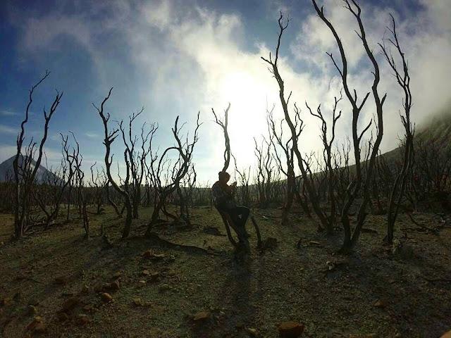 foto hutan mati di gunung papandayan