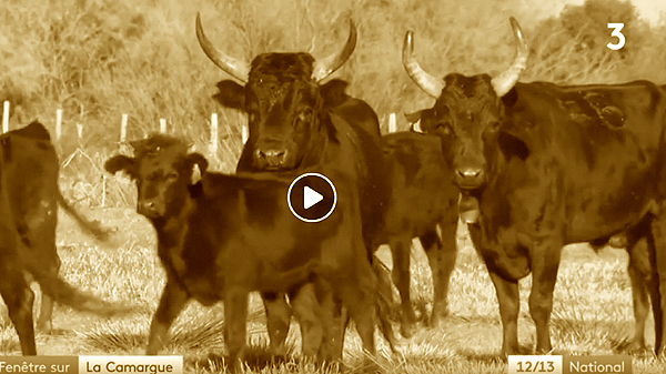 Camargue en vidéo