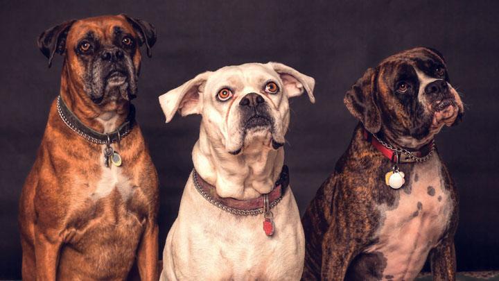 big dog names male