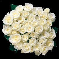 flower images, flower png, transparent flower png, flower image,