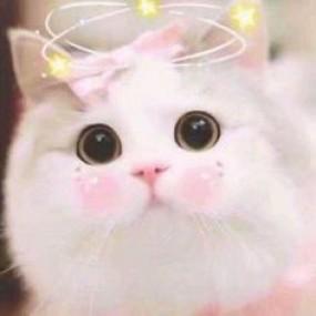 Tổng hợp Avatar mèo dễ thương