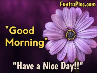 Beautiful Good Morning Sunday Images