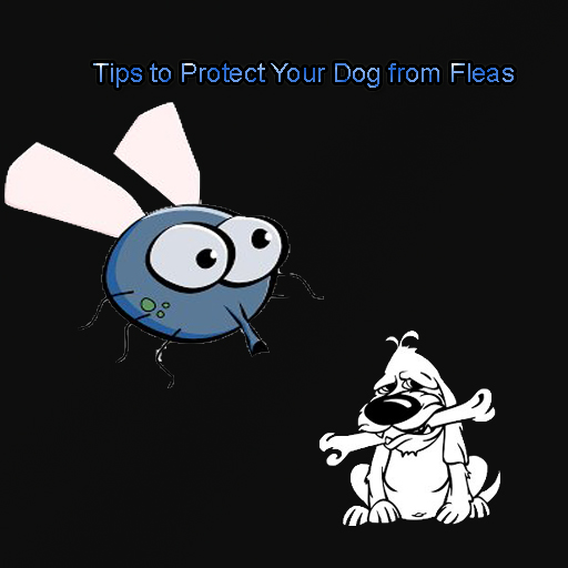 Tips to Protect Your Dog from Fleas