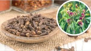 نبات القرنفل علاج طبي قديم وفعال