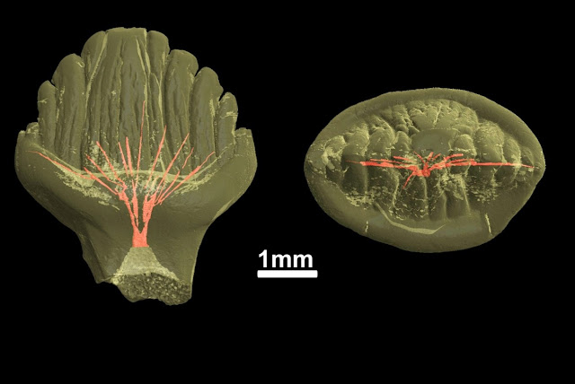 Scientists examine more than 60 teeth of stegosaurs from Eastern Siberia