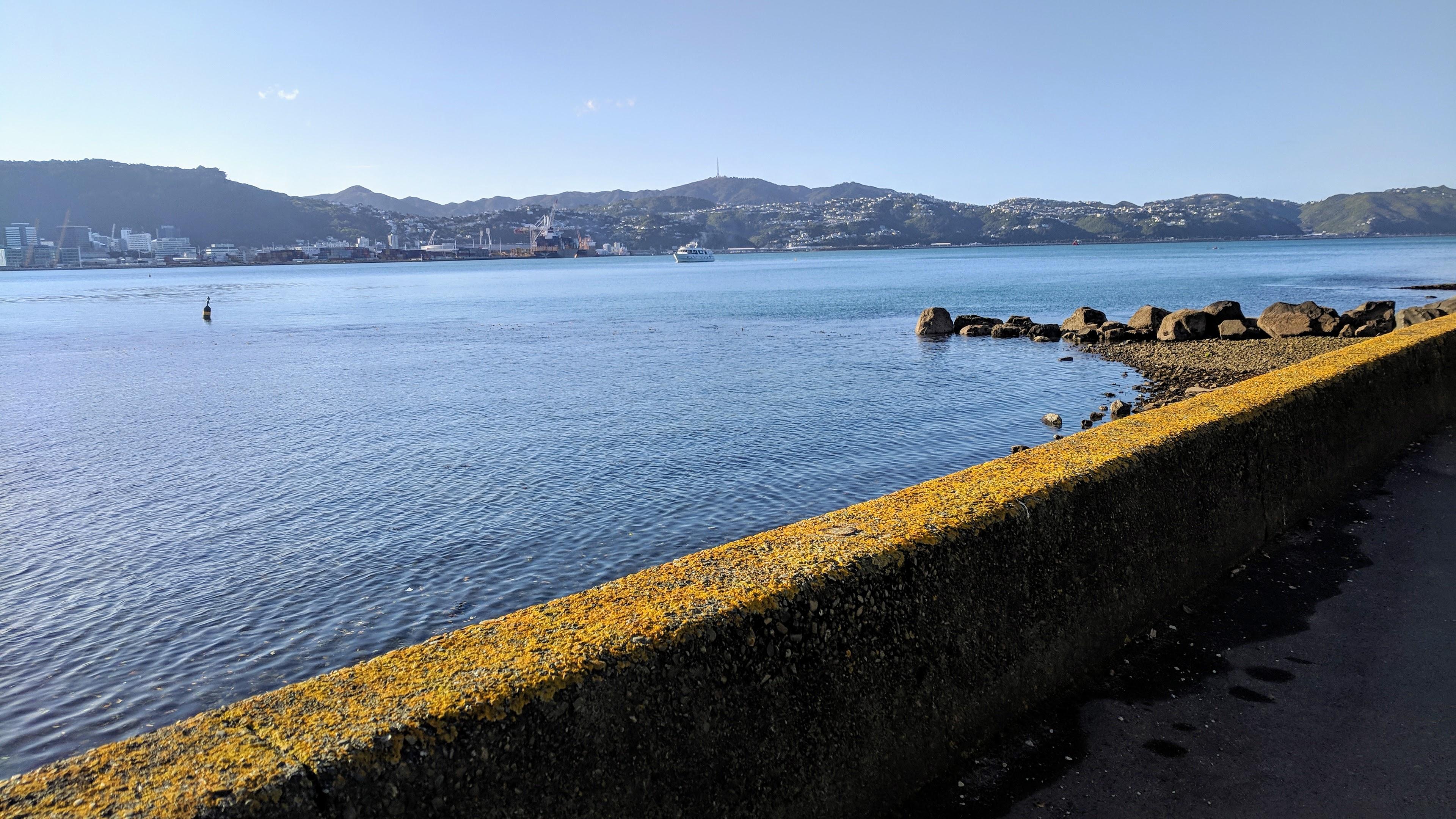 Lines of Wellington Harbour