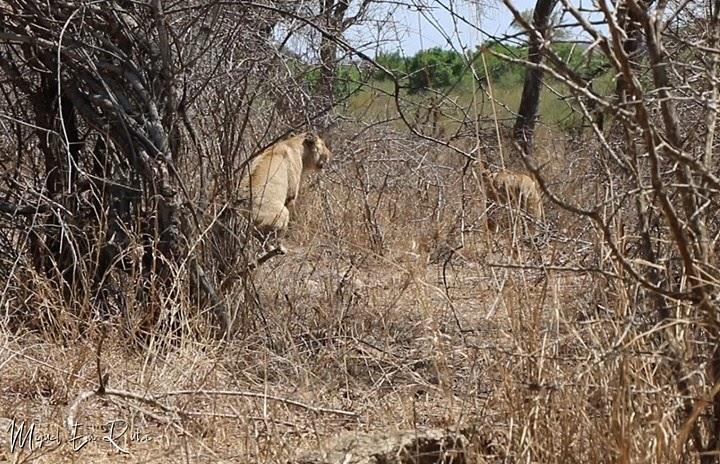 Leonas-Sabie-River-Kruger