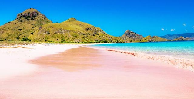Menikmati Keindahan Pantai PINK Lombok