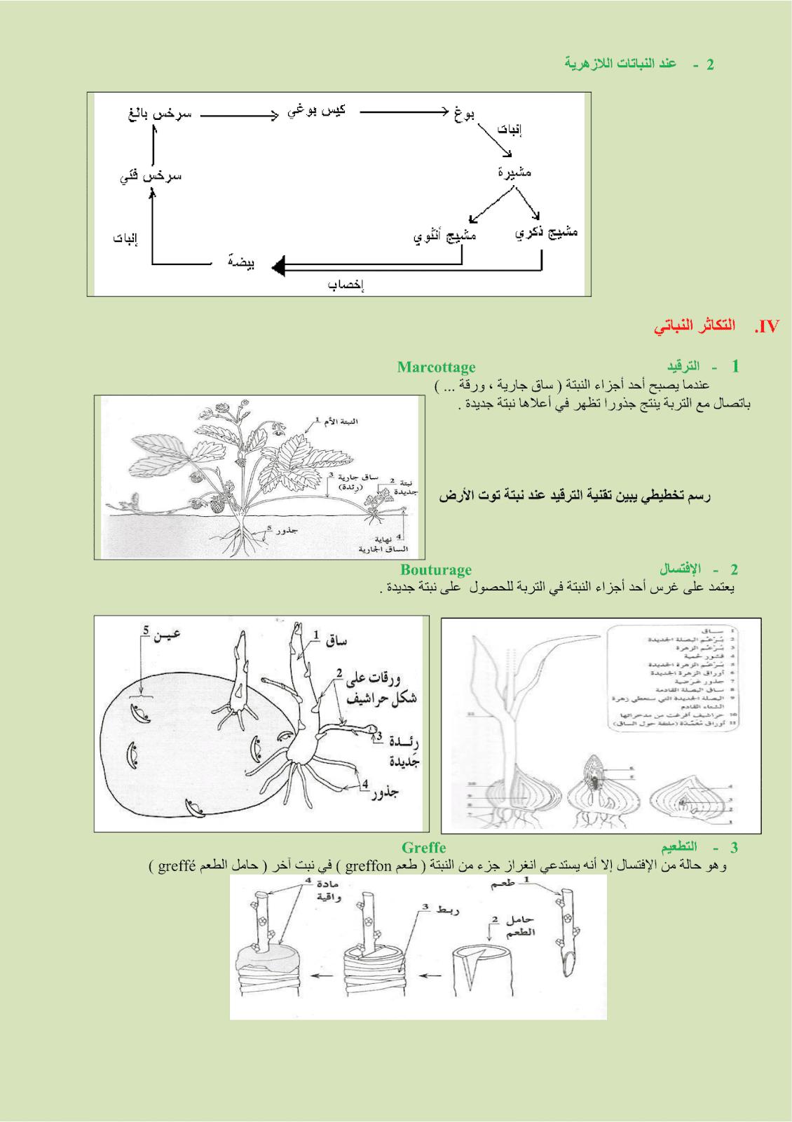ملخص درس التوالد عند النباتات