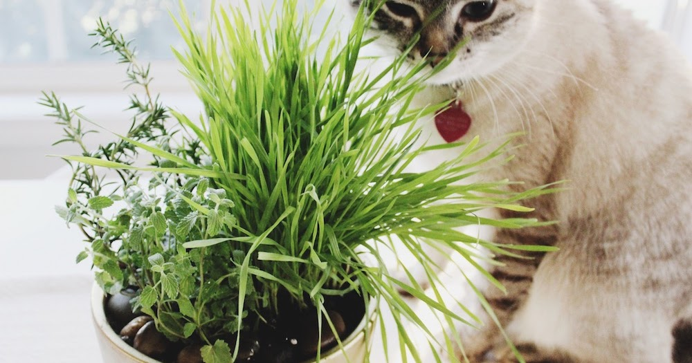 how to make cat garden