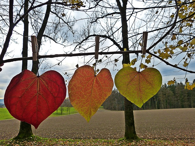 ảnh 3 chiếc lá mùa thu đẹp