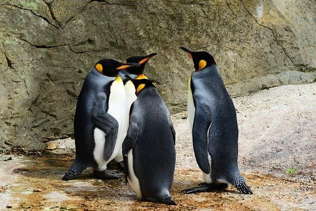 fakta menarik tentang penguin