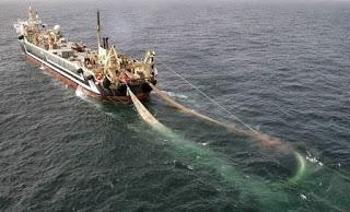 indonesia impor ikan beku dari cina mencapai 40 %