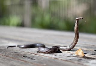 arti mimpi dikejar ular