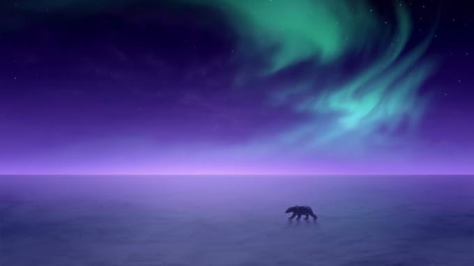 Urso polar na Antártida