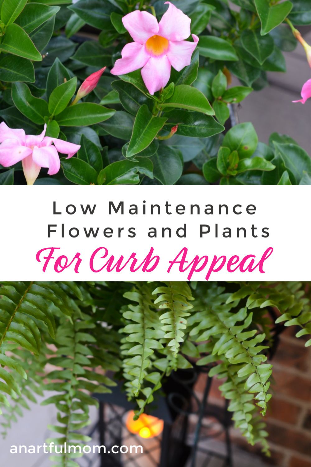 Low maintenance flowers and plants