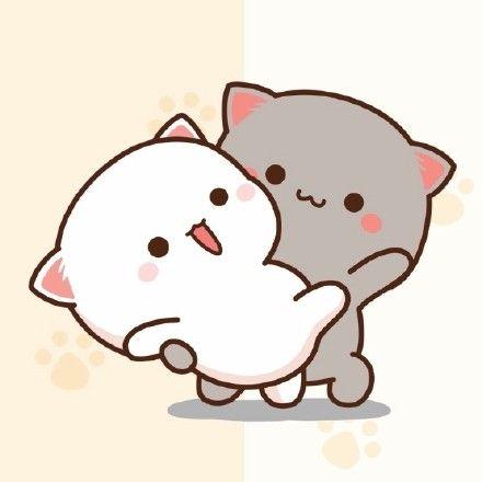avatar mèo con
