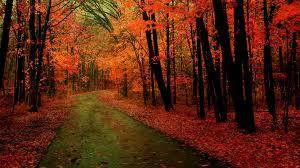 world best forest  hd wallpaper download20