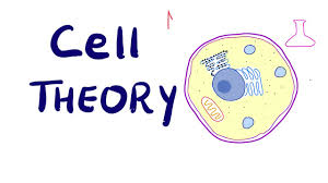 Full Detail of Cell Cycle Processes of Mitosis  and Cell Theory Explanations