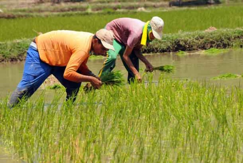 Pembenahan Pertanian Indonesia Kabar Pangan