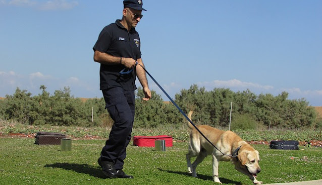 Dogs sniff out COVID-19