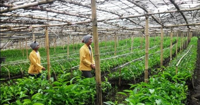 4 Tips Memulai Peluang Bisnis Pertanian